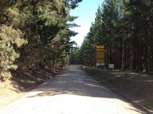 Belanglo Forest 3